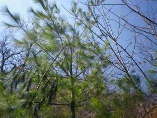 cedarvale-broken-trees-april-25-2014-302