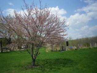 cedarvale-cleanup-day-023