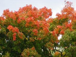 cedarvale-fall-colours-065