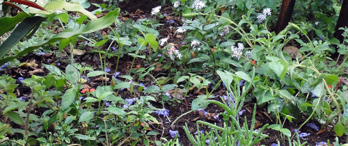 flowerbedbycngarachu