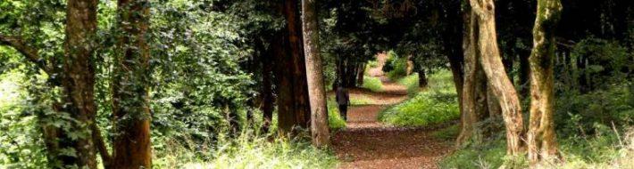 City Park forest path view