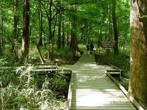 Site 1 Trail Start