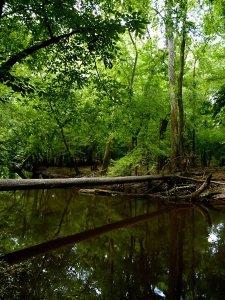 Cedar Creek II