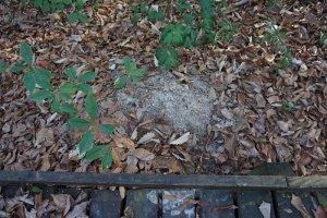 Site-13-Armadillo-burrow