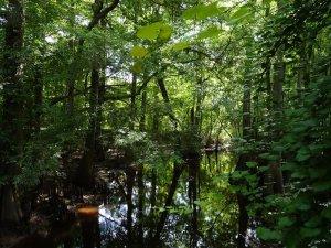 Site 5 Cedar Creek