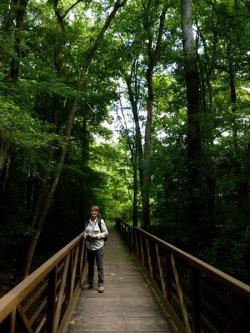 Site 7 Cedar Creek Bridge