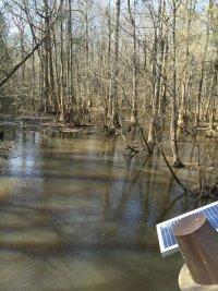 Cedar Creek from Bridge B
