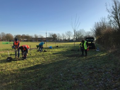 Doing our bit on tree planting week