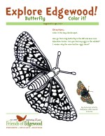 Bay Checkerspot Butterfly coloring sheet