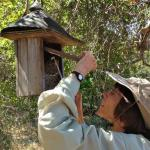 Frances Morse inspecting bluebird box