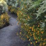 Clarkia Trail