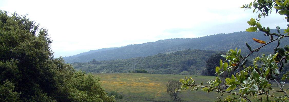 Butterfly habitat from ridgeview