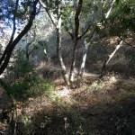 Sylvan Trail