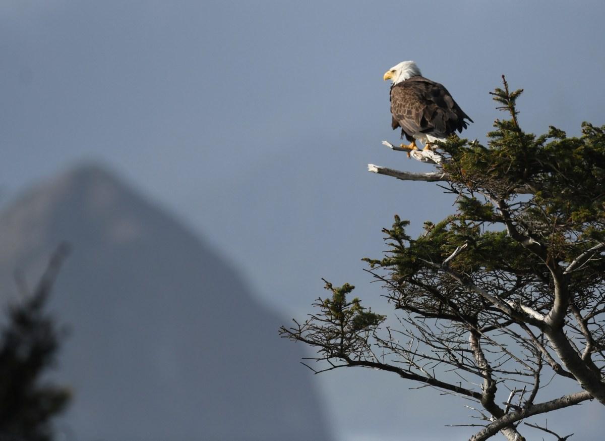 Lou-Solitske-Eagle-Eying-Haystack-Rock