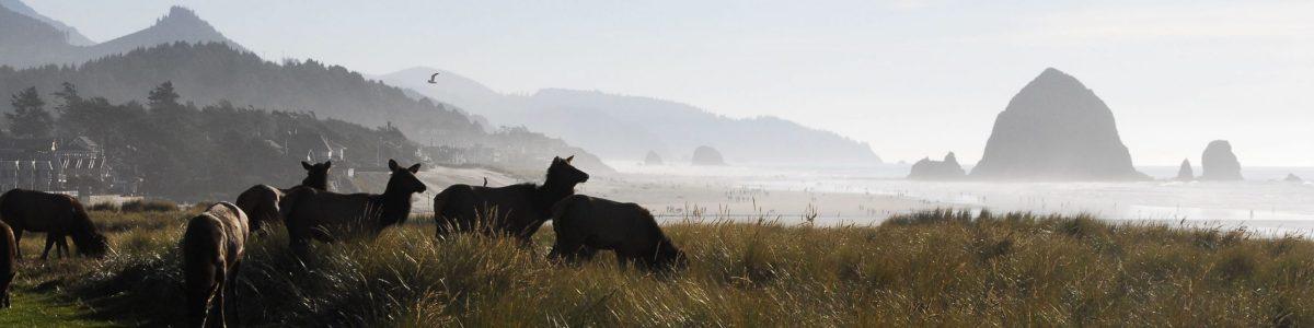 Stanley-Brown-Elk-at-the-Beach