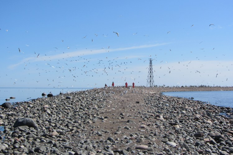 A cloud of birds on Gull Island