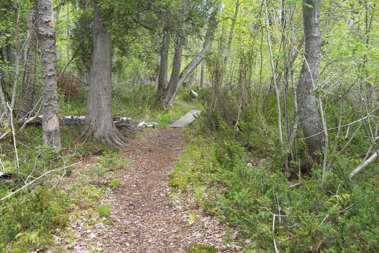 Hiking trail on Sand Island