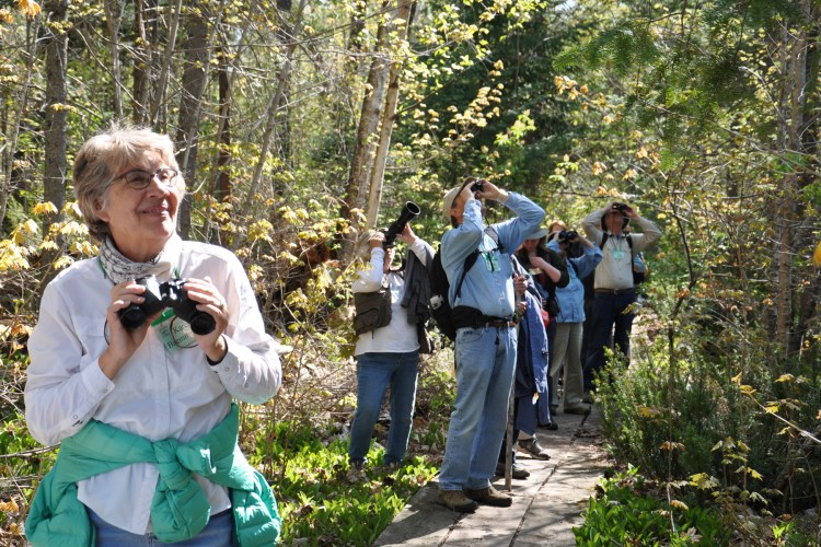 Birdwatching is a popular activity on the islands