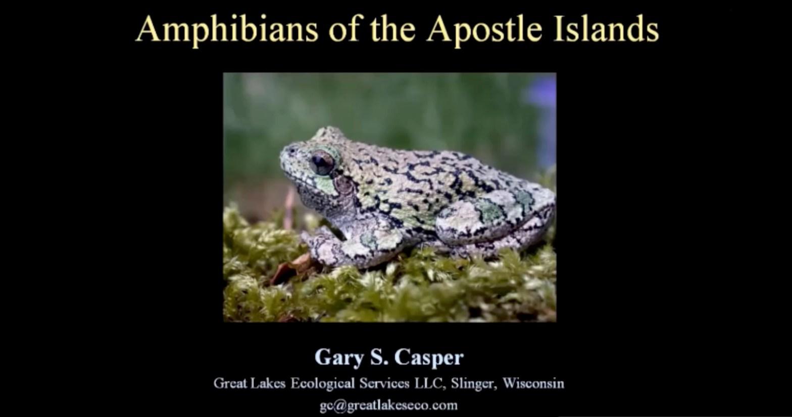 Amphibians Cover