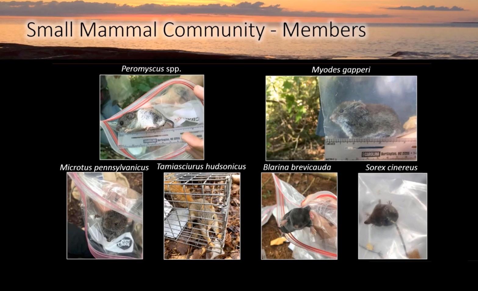 Small-Mammals-Cover