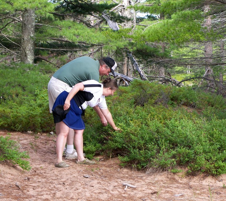 visitors picking blueberries at Julian Bay on Stockton Island
