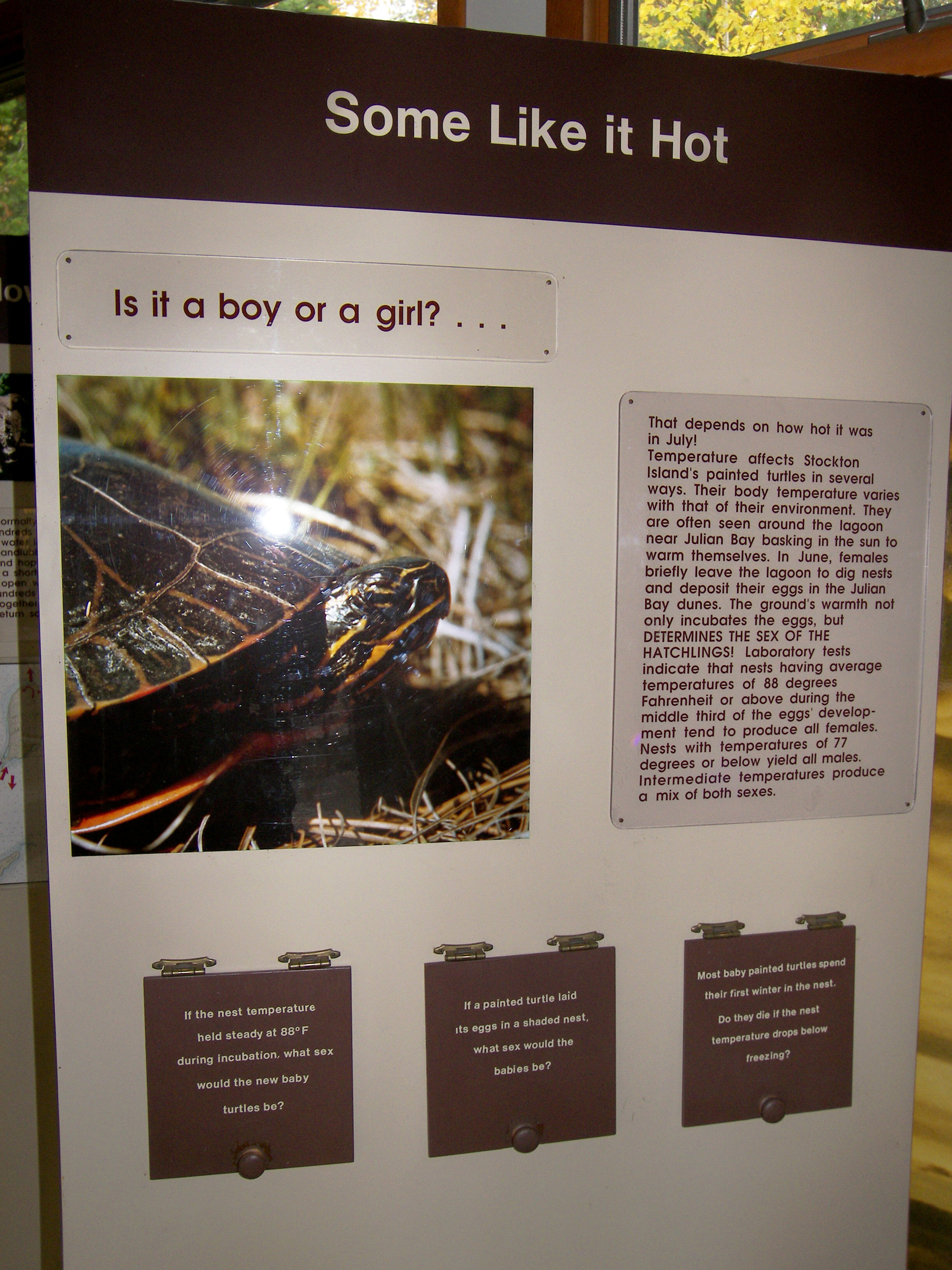 The painted turtle exhibit in the Stockton visitor center