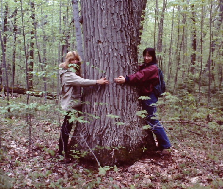 Diane and Erica Peterson measure the circumference of an Oak tree on Oak Island