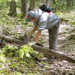 Forrest removing a downed tree from an island trail