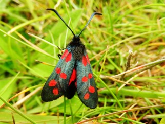 insect, Tiree