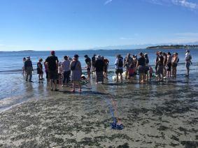 BeachSeine June 25-2017 Wiley7
