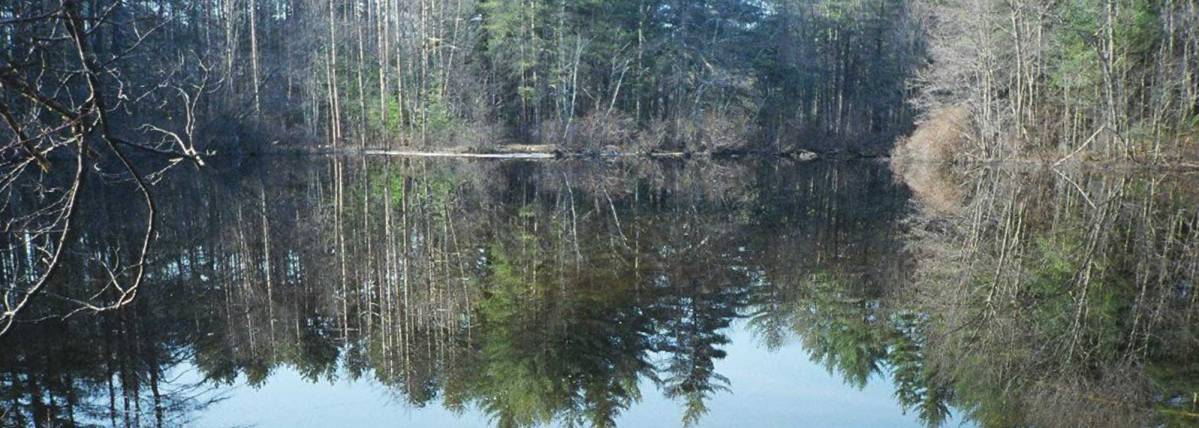 Trees reflecting on a pond