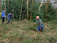 Tree Planting Team