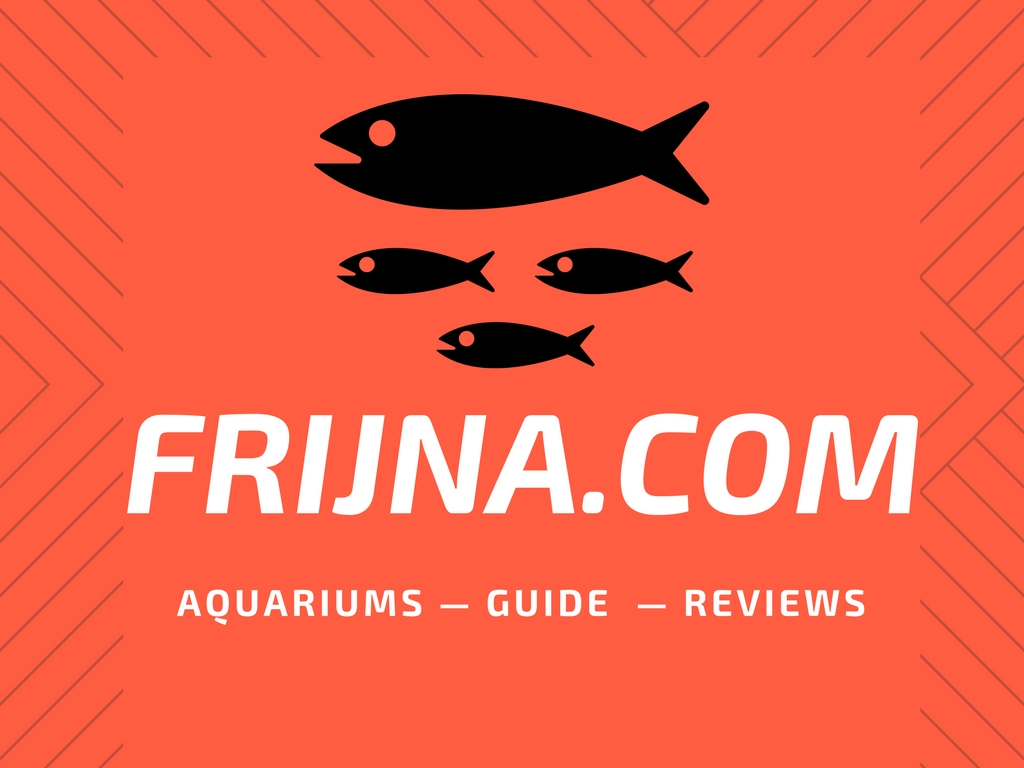 Best fish tank 2018 | Modern Aquariums tanks Buying Guide