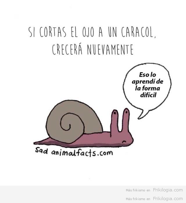 Problemas de animales3