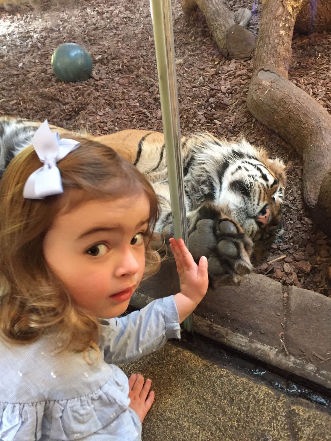 Fantastic London day trip activities with toddlers – The Zoo!