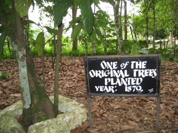 Tetteh Quarshie Cocoa Farm : Top 5 Tourist Sites in the Eastern Region of Ghana