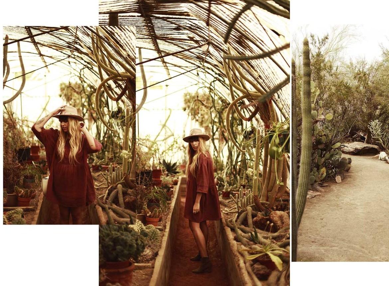 palmsprings-cacti