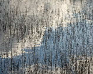 Reeds and reflections, Stillwater National Wildlife Refuge