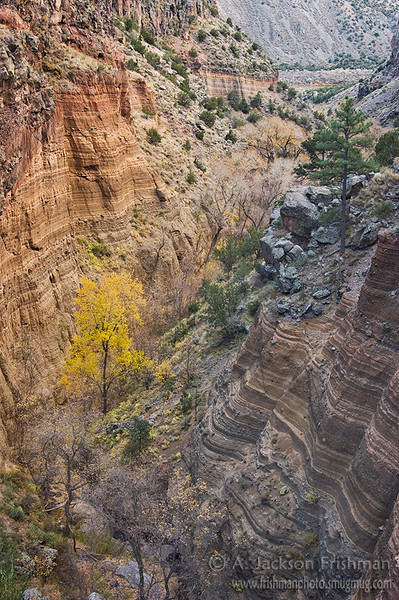 The last of autumn in lower Frijoles Canyon, Bandelier National Monument