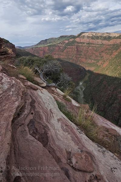 Sandstone swirls high above the Green River, Dinosaur National Monument, June 2010.