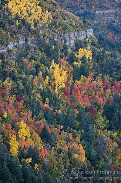 Maples and aspens on the cliffs of New Mexico's Manzano Range