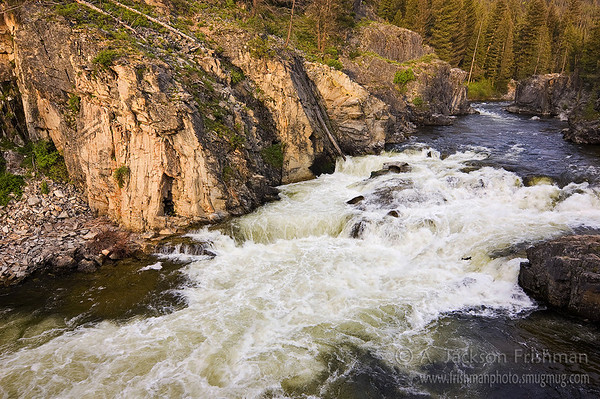 A Chinook salmon leaps up Dagger Falls on Idaho's Middle Fork of the Salmon