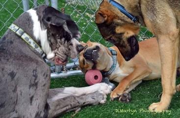 Frisky Dog finesse Ball Play