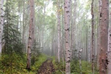 BnB-trails1-jpg