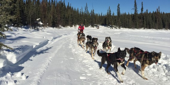Dog sled rides Fairbanks Alaska
