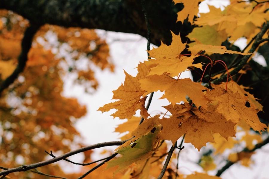 How To Treat Seasonal Depression Efficiently