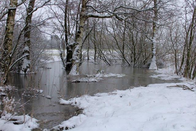 soe, marken, birketraeer, frugtlunden, vinter, sne