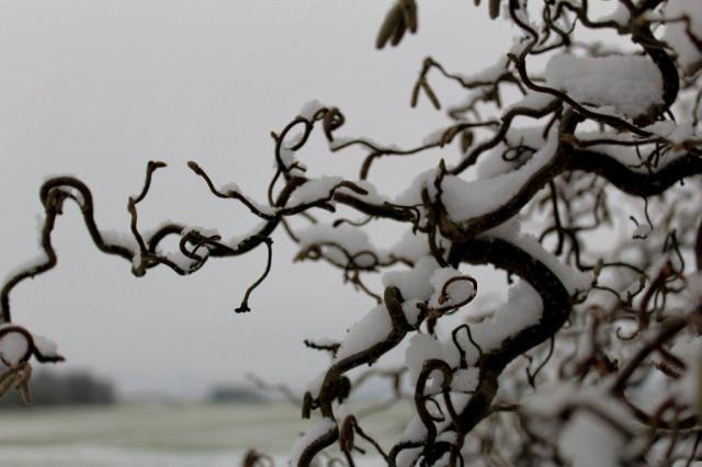 vinter, koldt, hygge, februar, troldhassel