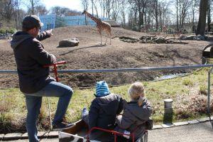 koebenhavns-zoo, zoologisk-have, giraf, zebra