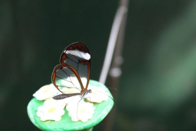 sommerfugl, koebenhavns-zoo, zoo